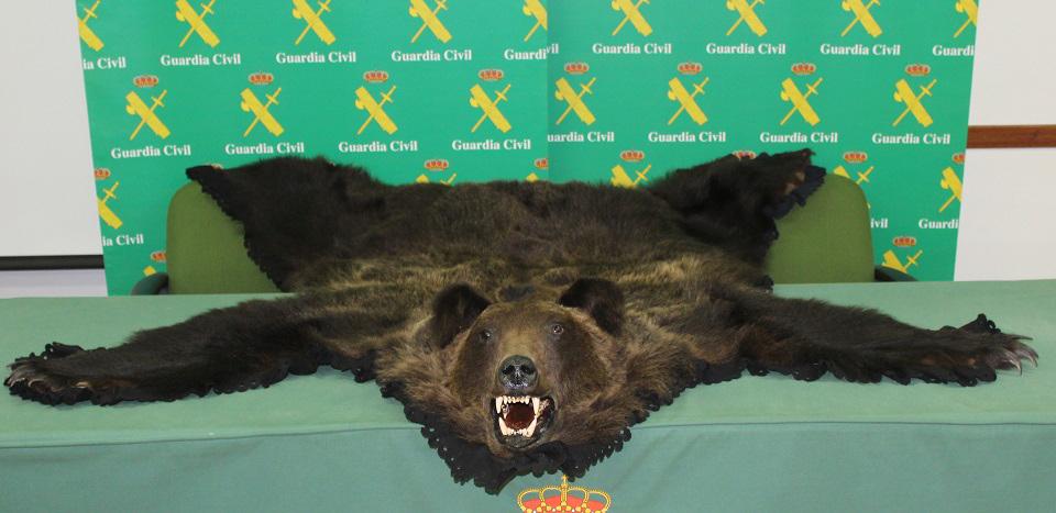 La Guardia Civil investiga a una persona por tratar de vender una piel de oso con cabeza en Rioseco