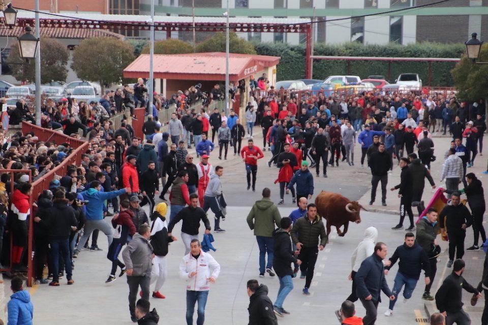 Miles de aficionados arropan al toro del Carnaval de Rioseco