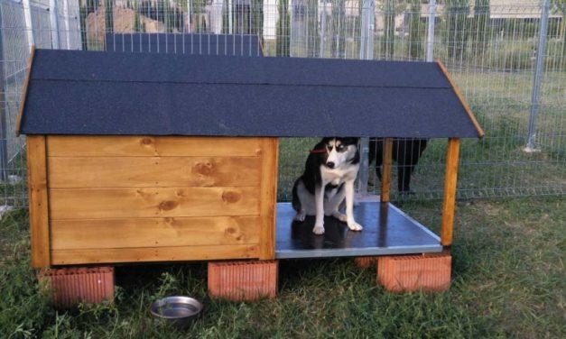 El Centro Canino La Malena de Villabrágima cuida gratis a las mascotas de sanitarios por el coronavirus