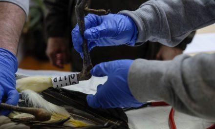 El Centro de Recuperación de Animales Silvestres de Valladolid pone en marcha un programa de voluntariado ambiental durante el verano
