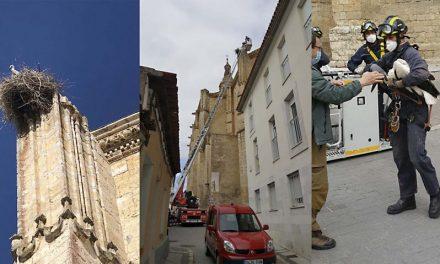"""Retiran de la iglesia de Santa María de Medina de Rioseco un nido de cigüeña en época de cría """"por peligro alto"""""""
