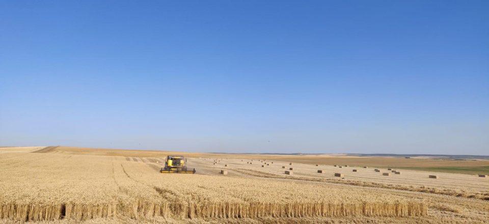 La cosecha de cereal en Castilla y León alcanza los 8,4 millones de toneladas, la segunda mayor producción de los últimos 35 años