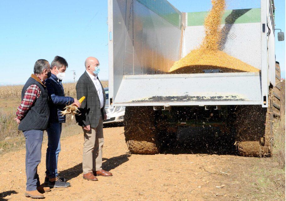 La cosecha de maíz sube en producción, en superficie y en rendimientos alcanzando los mejores números de los últimos 30 años, llegando a recogerse, de media, 12.734 kilos por hectárea