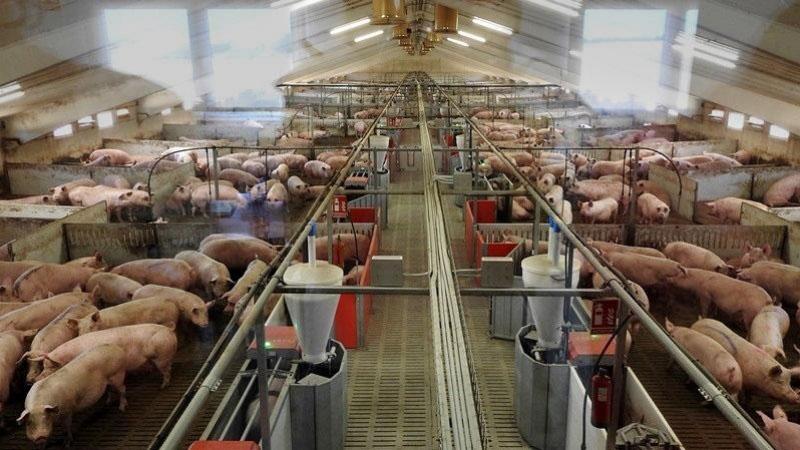 Convocadas concentraciones contra la ganadería industrial para este domingo